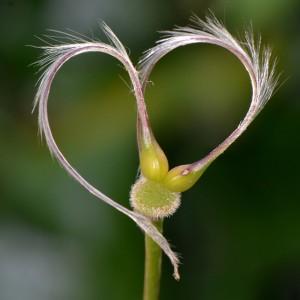 heart-885605_640